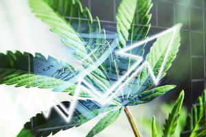 Growing Cannabis Company Seeks Investors
