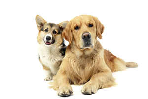 Top Brand Albuquerque Dog Care Business for Sale