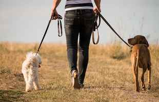 dog-walking-pet-sitting-and-pet-care-california