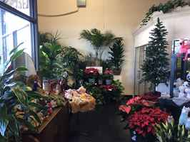 Profitable Well Managed Retail Florist in Denton