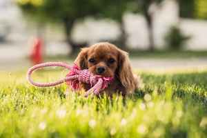Absentee Owned Pet Boarding & Daycare