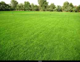 Established Lawn Treatment / Yard Control Business
