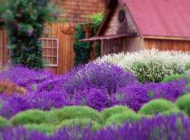 WA Lavender Farm 7+ Acres Manf/Retail/Event/VRBO