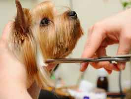 Pet Grooming Salon for Sale