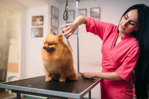 pet-grooming-business-hialeah-florida