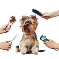 Dog Grooming and Day Care