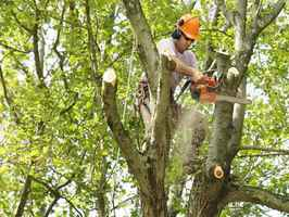 tree-service-and-landscaping-louisville-kentucky