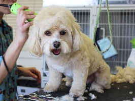 full-service-dog-grooming-boutique-palm-desert-california