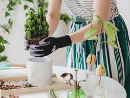 Indoor Gardening Kits, Sets and Gifts eCom Brand