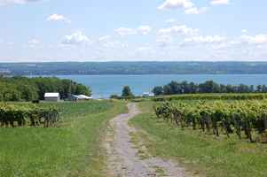 Turnkey Vineyard & Winery For Sale in Romulus, NY
