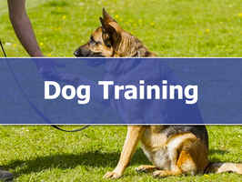 dog-training-franchise-florida