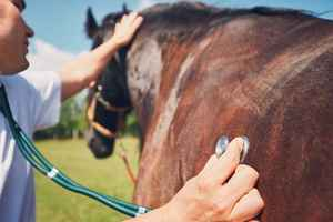 Popular Equine Veterinary Practice