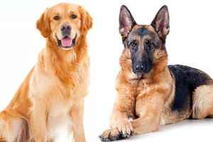 Professional Dog Training Business - Duval County