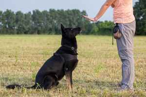 Professional Dog Training Business - Richland Co