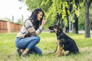 Professional Dog Training Business - Richmond Co