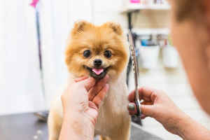 Pet Grooming Business - Prescott, AZ