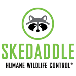 Skedaddle Humane Wildlife Control