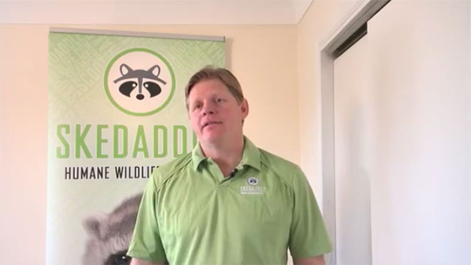 Skedaddle Humane Wildlife Control Video