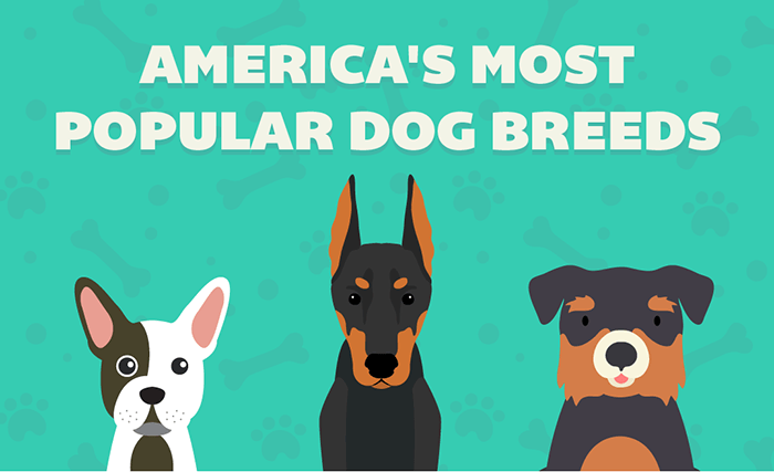 America's Most Popular Dog Breeds