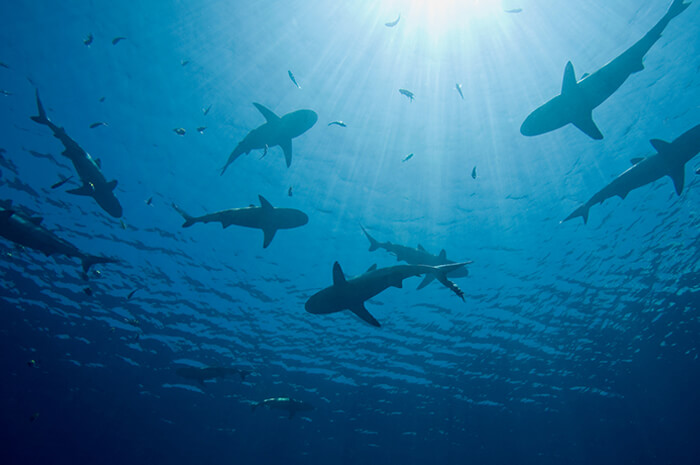 shark tank business lessons